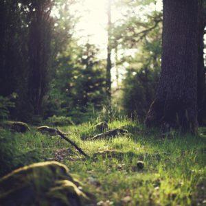 Bois et espaces naturels